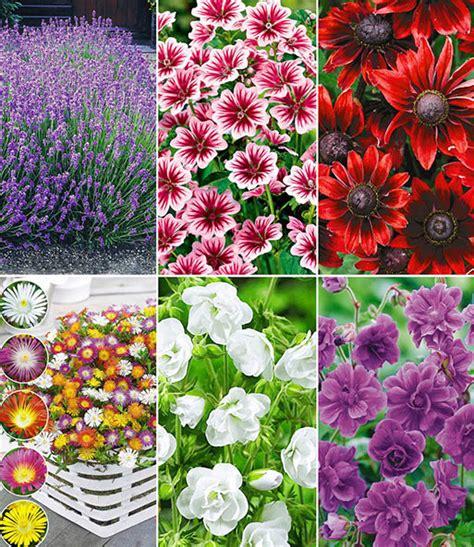 Baldur Garten Winterharte Pflanzen by Winterharte Dauerbl 252 1a Pflanzen Baldur Garten
