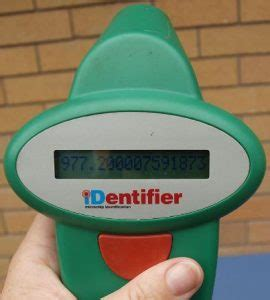 microchip scanner for dogs word of the day microchip discoveries