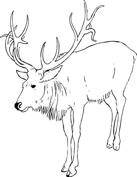 coloring page reindeer antlers free coloring pages of antlers template