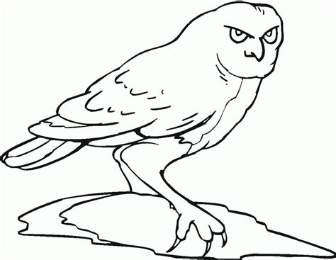 color book free printable owl coloring pages for