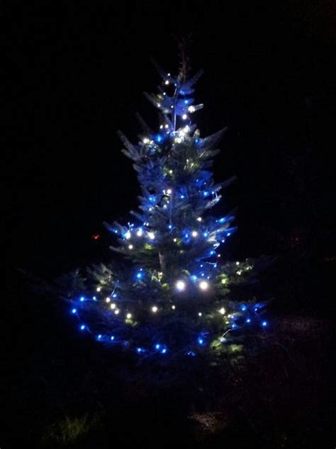 blue and green christmas tree pictures photos and images