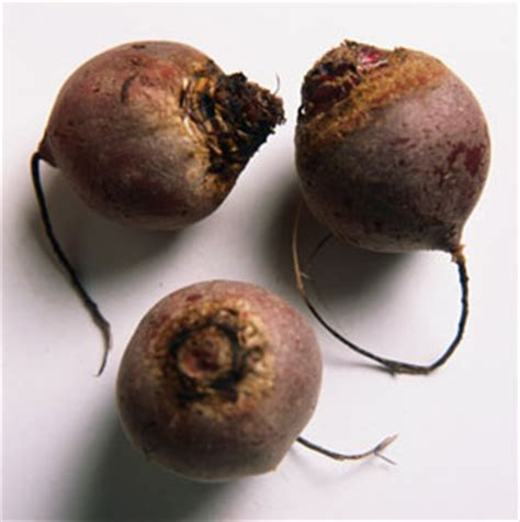 beets urine color the connection between beets urine and iron