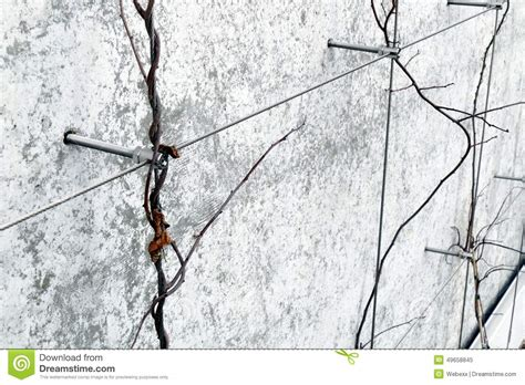 wire for climbing plants wire trellis stock photo image 49658845