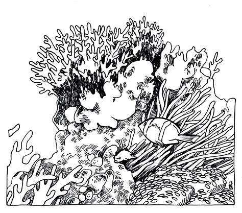 Clipart Of A Sketched Reef by Coral Reef Black And White Pencil And In Color