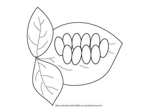 caterpillar egg coloring page butterfly egg clipart black and white bourseauxkamas com