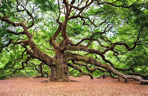 Eiche Bilder by Oak Tree Symbolic Meaning Whispers Channels