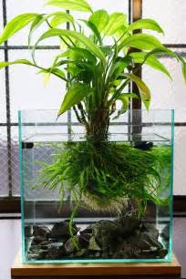 Bamboo Aquascape by Gorgeous Aquarium Can I Do This With Lucky Bamboo With