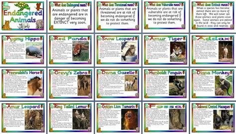 printable animal fact cards endangered animals posters 2 pounds teaching topic