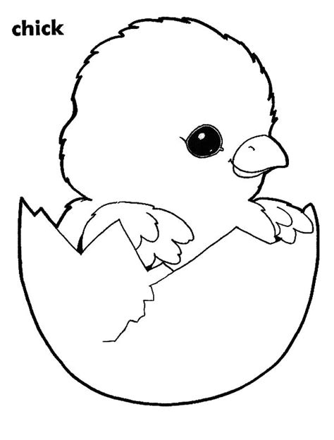 coloring page baby chick adorable chick hatching coloring pages best place to color