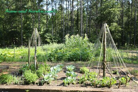 Small Trellis Trellis Made With Small Trees And Twine And Garden