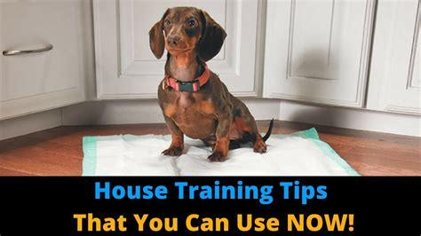 dog house training methods 3 tips to make house training your dog faster potty train your dog the easy way funnydog tv