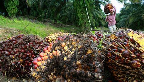 Minyak Kelapa Sawit Di Indonesia cupuma tantangan indonesia jadi penyuplai terbesar minyak