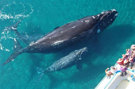 imagenes reales de ballenas los 10 mejores lugares del mundo para avistar ballenas