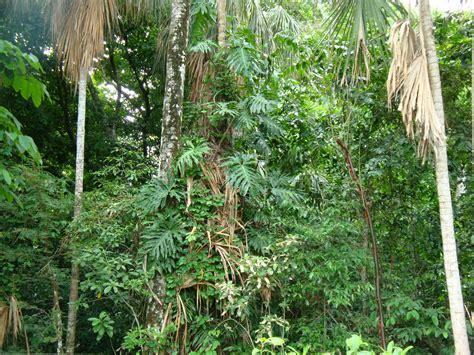 la selva tropical file tabasco selva jpg