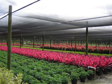 wholesale florida palm trees tropical plants foliage wholesale growers