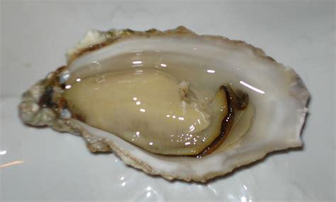 Kerang Oyster 牡蛎 图片 互动百科
