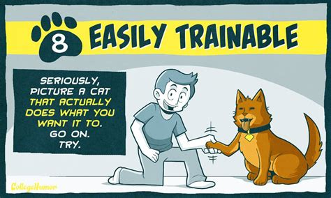 more than 100 ways to improve your college luck ebook 10 ways to make cats even better than they already are