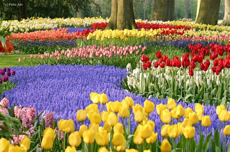imagenes tulipanes naturales holanda los jardines del keukenhof
