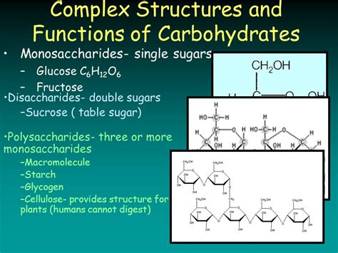 carbohydrates 4 functions complex structures and functions of carbohydrates ppt