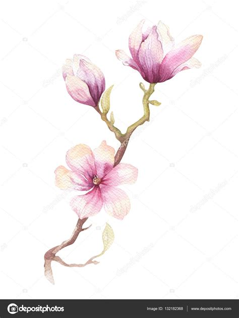 watercolor painting magnolia blossom flower wallpaper