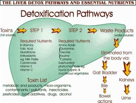 Grain Detox Symptoms by How To Minimize And Prevent Candida Die Symptoms
