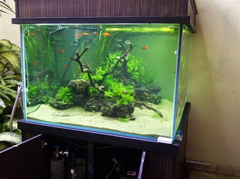 greenbox aquascape aquascape kubus