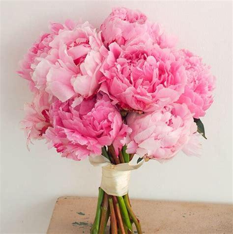 wallpaper bunga peony gambar april 2014 cakrawala susindra bunga peony gambar di