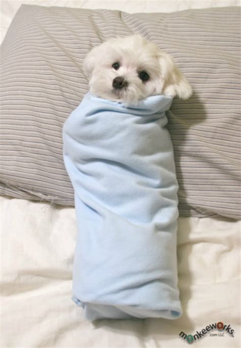 puppy burrito 15 burrito blanket dogs with snuggle sauce animal and blanket