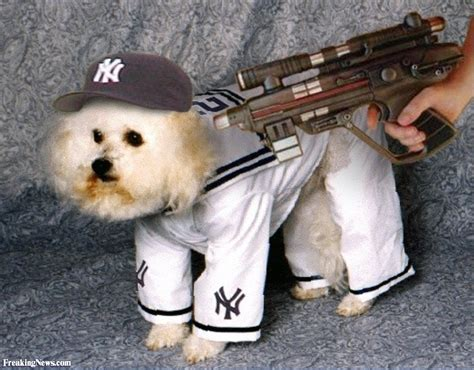 nyc puppies new york yankees costume pictures freaking news