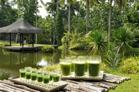 The Farm Detox Philippines by The Farm At San Benito Lipa City Philippines Veggiehotels