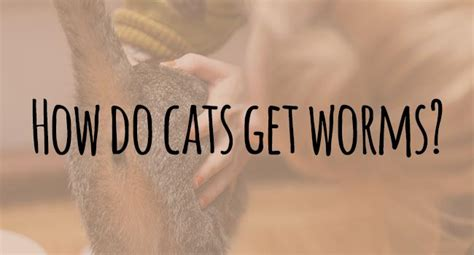 how does a get worms how do cats get worms