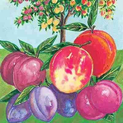 fruit cocktail tree fruit cocktail tree direct gardening