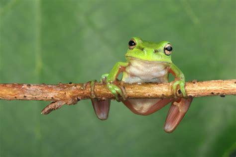 pet frog names    cute  funny