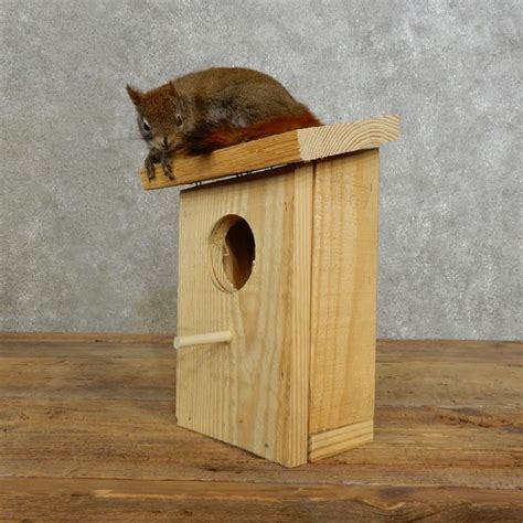 red squirrel birdhouse mount for sale 17200 the