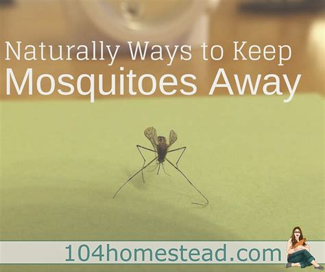 scents to keep mosquitoes away ways to keep mosquitoes away naturally