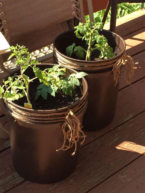 diy  gallon bucket patio container tomato planter spray