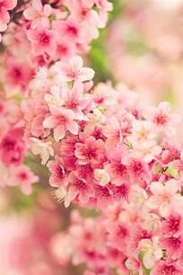25 best ideas about japanese flowers on pinterest japanese cherry blossoms pink blossom and