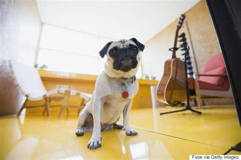 Quietest Apartment Dogs 12 Questions You Absolutely Must Ask Before Renting An