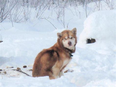 Mat Su Animal by Matanuska Susitna Borough Time For Animal Cruelty