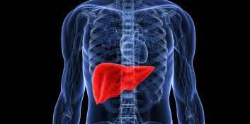 Liver location on man liver free engine image for user manual