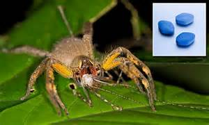 Could Spider Venom Be The Next Viagra Daily Mail Online | could spider venom be the next viagra daily mail online