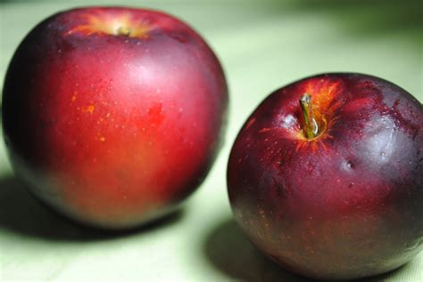 black arkansas arkansas black apple fruit maven