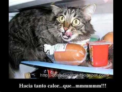 imagenes de amor con gatos gatos chistosos imagenes fotos echo por celeste youtube