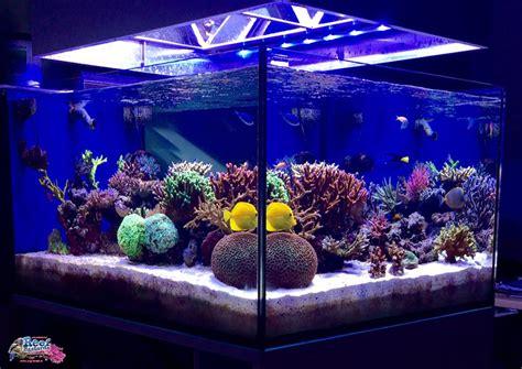 vasche per acquari marini dsb carbonato di calcio si grazie