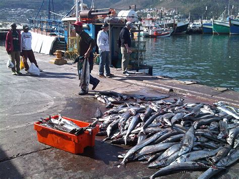 pedal boat for sale south africa awol tours pedals cape town mingling with local fisherman