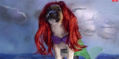 puppy in the the undeniable cuteness that is puppies wearing disney costumes in motion huffpost