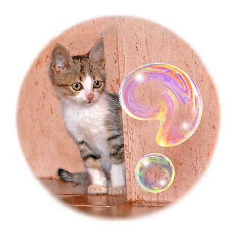 bobble kitten kitten with query soap pictures optical
