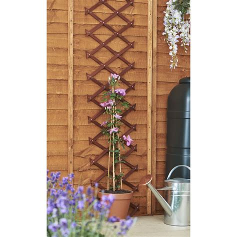 Wood Plant Trellis Wilko Expanding Wood Trellis 180 X 30cm At Wilko