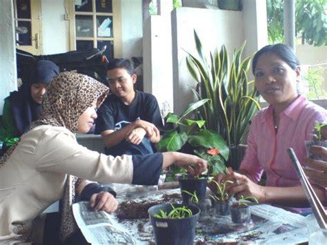 Jual Bibit Anggrek Kultur Jaringan cara menanam bibit anggrek hasil kultur jaringan esha flora