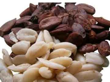 Kacang Kenari kacang kenari